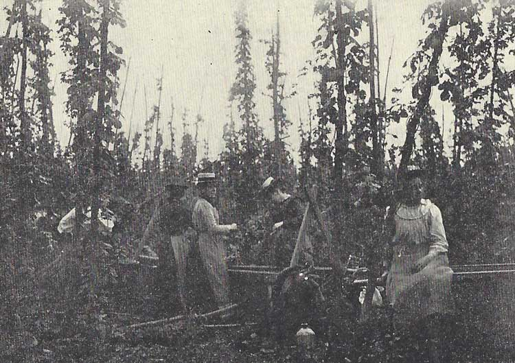 A group of women picking hops.